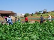 20110919_farm01