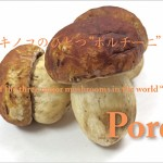 "One of the three major mushrooms in the world ""Porcini""<br> 世界三大キノコのひとつ""ポルチー二"""