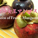 Queen of Fruits, Mangosteen<br> 果物の女王マンゴスチン