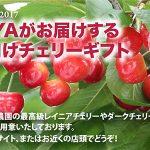 Nijiya Cherry Gift to Japan 2017